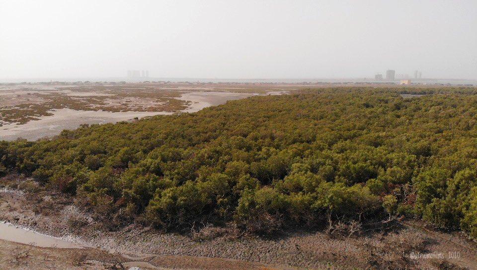 Mangroves at the Bundal Island